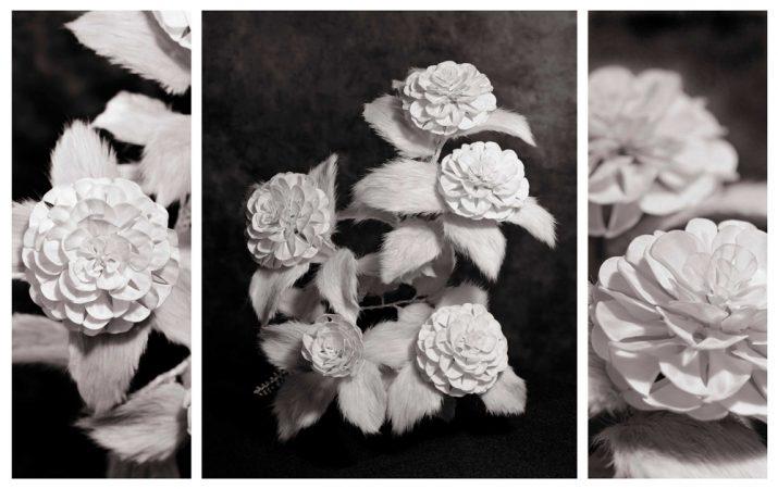 Otome_Camellia_photo