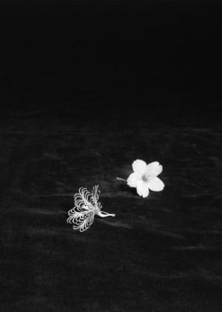 HONEBANA (Born Flowers) Cherry Blossoms #1